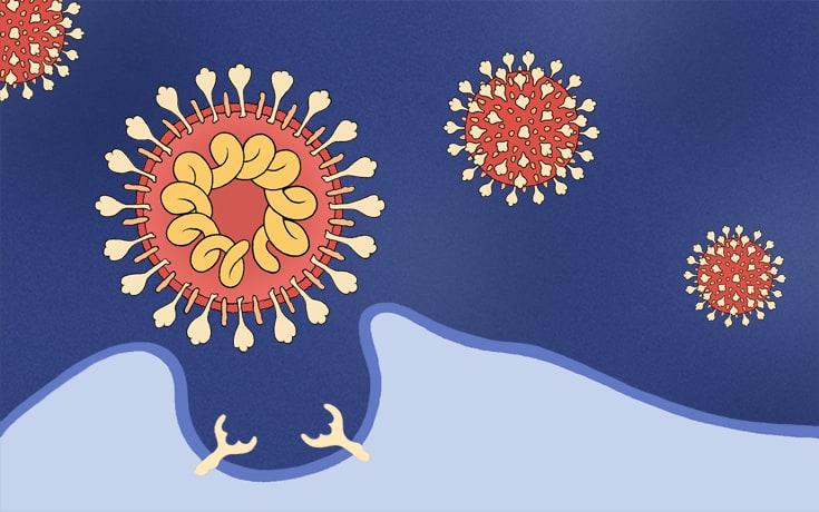 Biologia do Vírus e Resposta Imune
